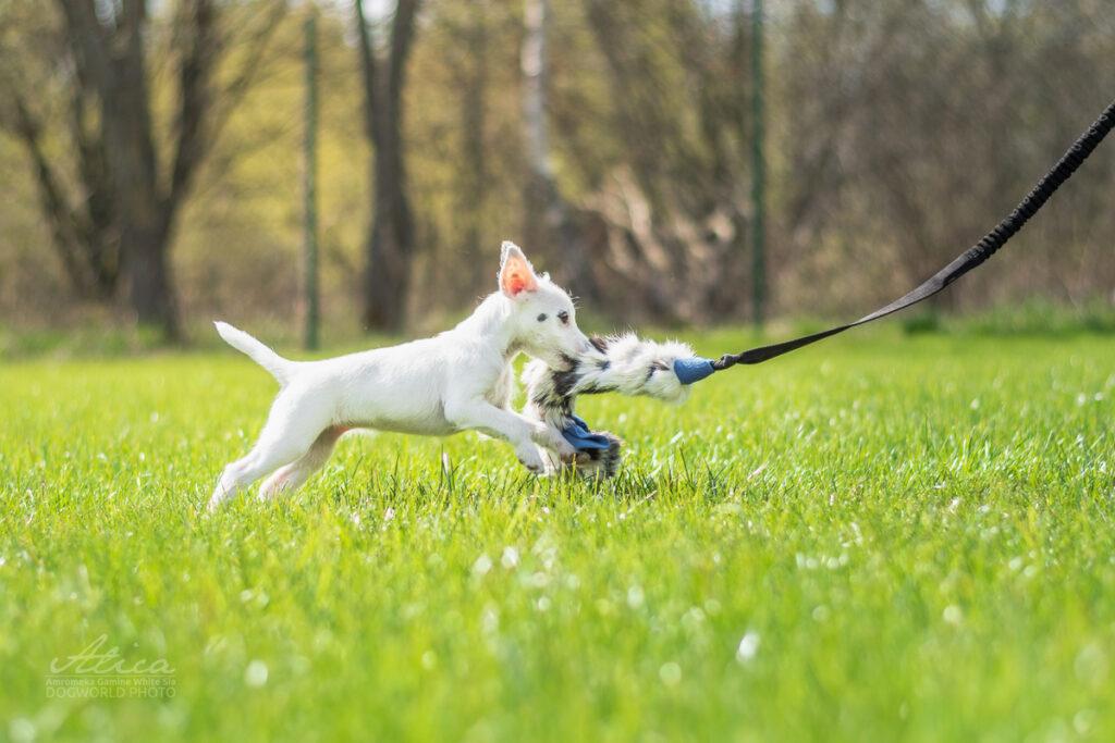 Pes s hračkou z Pamlskového ráje